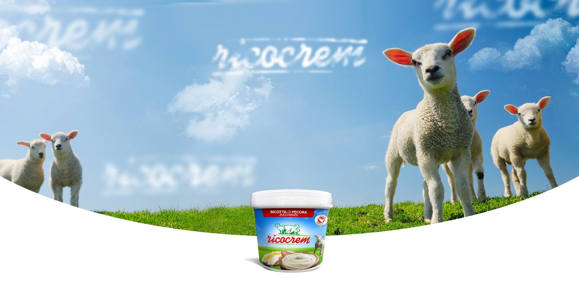 crema di ricotta di pecora per dolci ricocrem